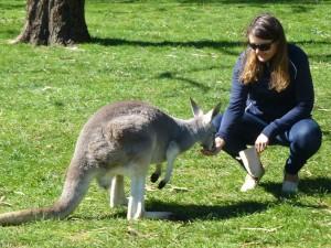 09_kangaroos-1