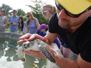cayman-turtle-farm-island