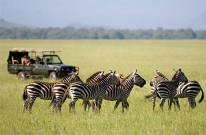 safaris-in-masai-mara-title